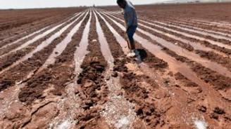 Pamuk üreticilerini ekim telaşı sardı