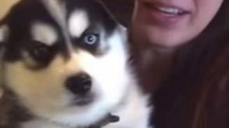 Bildiğin konuşuyor bu köpek
