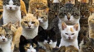 ''Kedi Videosu'' değil, Adası!