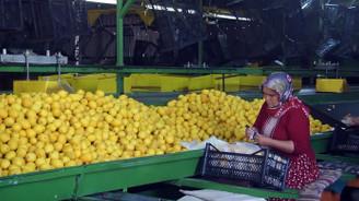 Narenciye ihracatçısının Rusya sevinci