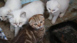 Sınırda yakalanan kediler açık artırmayla satılacak