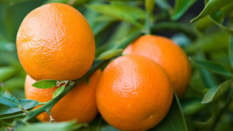 Kışlık meyve fiyatları yüzde 50 düştü