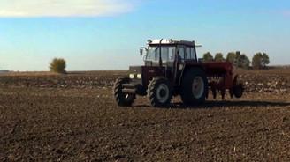 Buğday tohumları toprakla buluştu