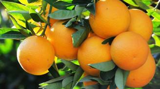 Türk narenciye ürünleri Rusya'ya ulaştı