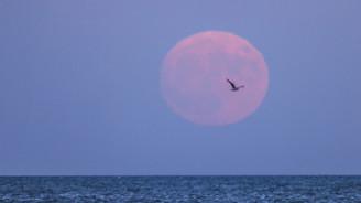70 yıldır insanlığın gördüğü en yakın Ay görüntüsü olacak