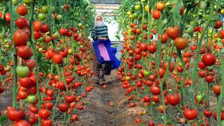 Tarımın istihdamdaki payı arttı