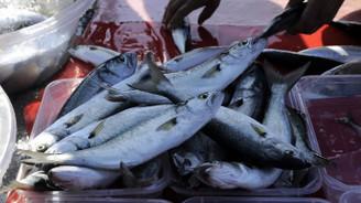Balıkçılar palamuttan sonra lüferden de umutlu