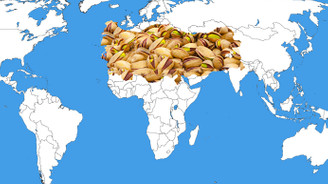 Antep fıstığı uluslararası piyasada iddialı