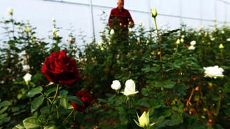 Öğretmenler Günü'nde güller Samsun'dan!