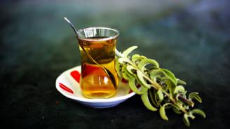 Ada çayı hasadına başlandı
