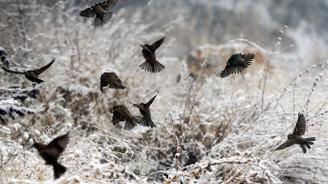 Ankara'ya kar uyarısı