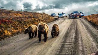 National Geographic 2016'nın enlerini seçti
