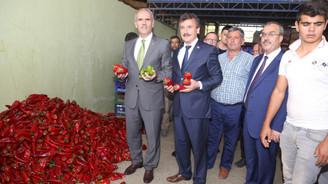 Tarım AŞ, Yenişehir'in biberini ihraç edecek
