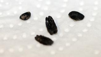 8 bin yıllık tahıl örnekleri bulundu