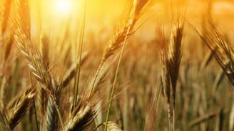 Türkiye, Rus tahıl alım hacminde liderliğe yükseldi