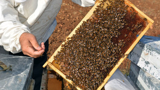 Arıcılar bal toplamaya başladı