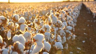 'Pamukta yeni tarım politikasına ihtiyaç var'