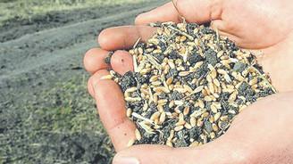 Atalık tohumlar takasa hazır