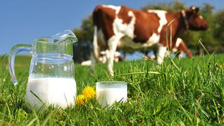 Toplanan inek sütü miktarı temmuzda arttı