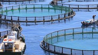 Kültür balıkçılığı Ordu'ya 40 milyon lira kazandırdı