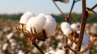 Milli Tarım Projesi'yle pamuk üretiminde artış bekleniyor