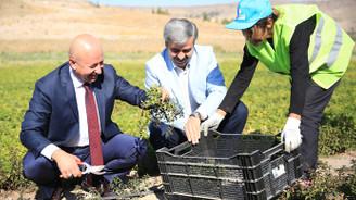 """""""Kayseri tarım şehri olarak anılacaksa bunun yolu Kocasinan'dan geçer'"""