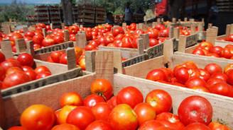 Rusya'ya domates ihracatı üreticileri umutlandırdı