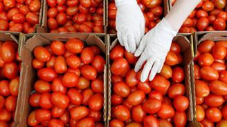 Rusya'ya domates ihracatında kafalar karışık