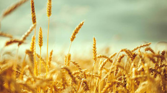 'Öyle bir ihracat artışı yakaladık ki buğdayda ithalatın suçlusu biziz!'