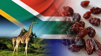 Güney Afrikalı firma kuru üzüm ithal edecek