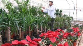 Sebze yanında süs bitkisi yetiştiriliyor