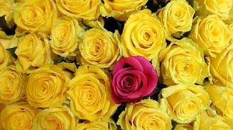 'Sevgililer Gününde çiçek satışı 20'ye katlanacak'