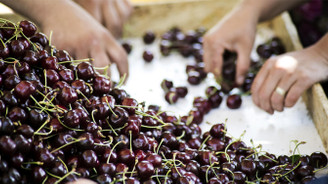 Bahçesini kaydetmeyen Çin'e kiraz ihraç edemeyecek