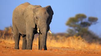 Hayvan nüfusu 42 yılda yüzde 58 azaldı