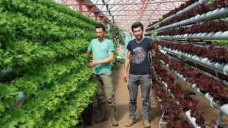 Topraksız tarımla verimi üçe katladılar