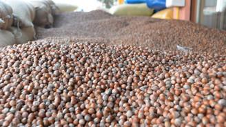 Fındık üreticilerine 'istiridye mantarı' önerisi