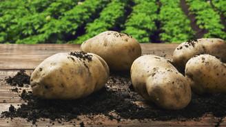 Patates fiyatı en çok azalan ürün oldu