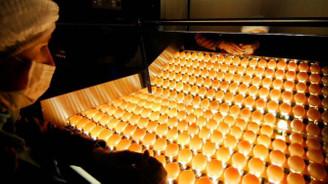 Yumurta ihracatçısı navlun desteği bekliyor