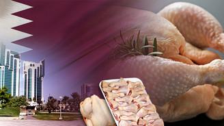 Katarlı müşteri 100 ton tavuk satın alacak