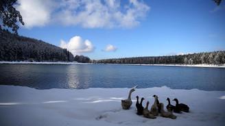 Topuk Yaylası 'tabiat parkı' ilan edildi