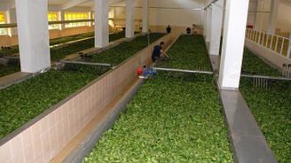 Çaykur ABD pazarında büyüyor