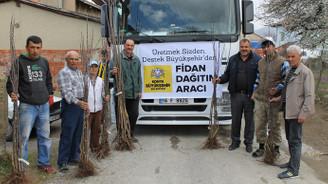 Konya'da çiftçilere 3,8 milyon adet fide ve fidan dağıtıldı