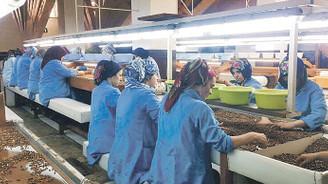 Güçlü Fındık, 'sezonluk ürün' dezavantajını KGF ile ortadan kaldırdı