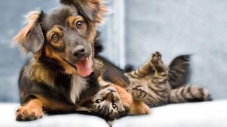Evcil hayvanların da sigortası var