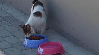 Bakanlık susayan sokak hayvanlarına el uzattı