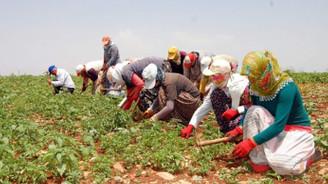 Mevsimlik tarım işçilerinin yevmiyeleri belirlendi