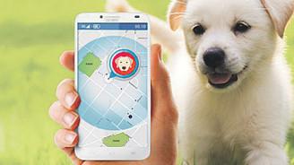 Evcil hayvanınıza yakından takip