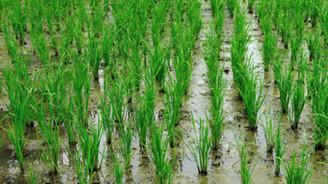 Tarım ÜFE aralıkta yüzde 1,35 arttı