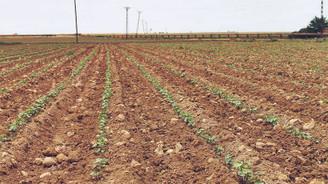 Fakıbaba: Tarımsal kuraklık endişesi yok