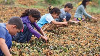 Türkiye'de 709 bin çocuk işçi var